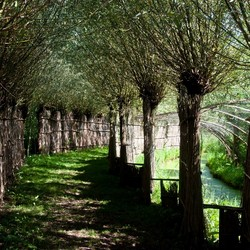 eendenkooi Biesbosch