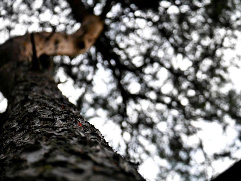 Kijk goed! Dit is het werk van een boomklever. - Op vakantie zag ik dat de boomklevertjes in de tuin besjes, van ik geloof de taxus, meenamen en tusse
