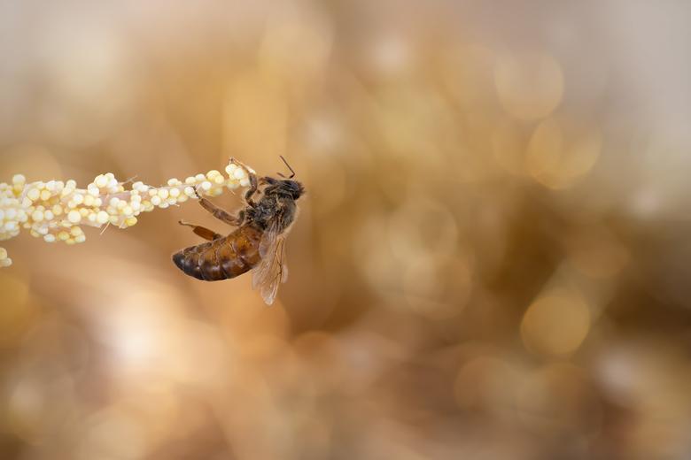 Queen bee... - Bijenkoningin...