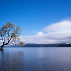 That Wanaka Tree - Day
