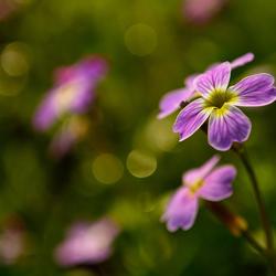 Bloemen uit een zakje.