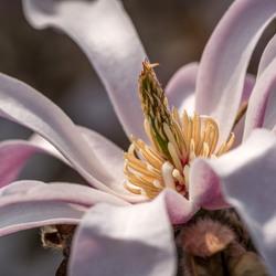 Flower Power,........