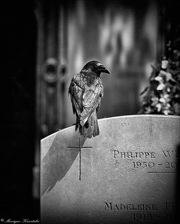 Oracle bird -