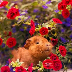 Fluffy Flowers