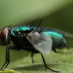 Groene ......vlieg