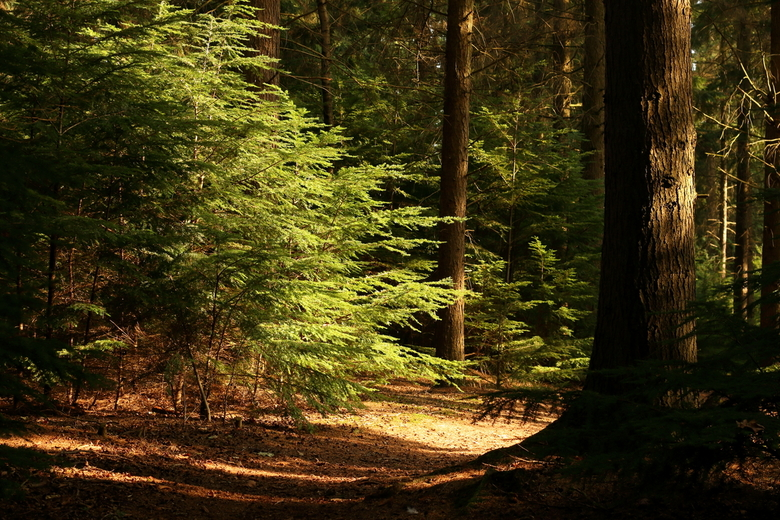"""Plaatje - Tijdens een wandeling in het bos zag ik dit prachtige plaatje en ik kon het vastleggen zoals ik ook bedoelde. <img  src=""""/images/smileys/smi"""