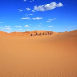 Kamelentocht Woestijn