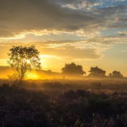 Hoorneboegse Heide III