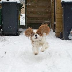 clint in de sneeuw