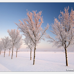 Bomenrij(p)