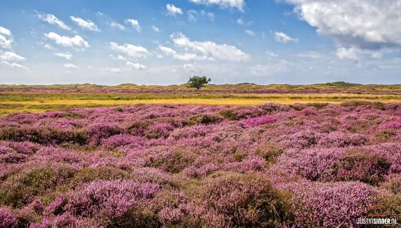 Mooie kleuren op Texel. - De maand augustus is de heide maand op Texel. Op deze foto de mooie paarse kleur van de heide, het gele zand en de blauwe lu