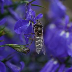 Een zweefvliegje