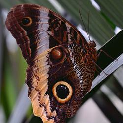Vlinder op stengel