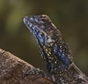 Reptielenhuis De Aarde Breda