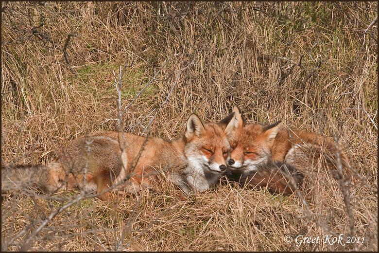 Moeder en dochter vos
