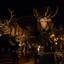 SBS6 Kerstparade Eindhoven
