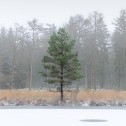 Sneeuw op de woldberg