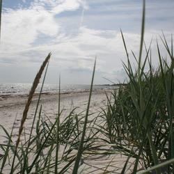 Beach Falsterbo