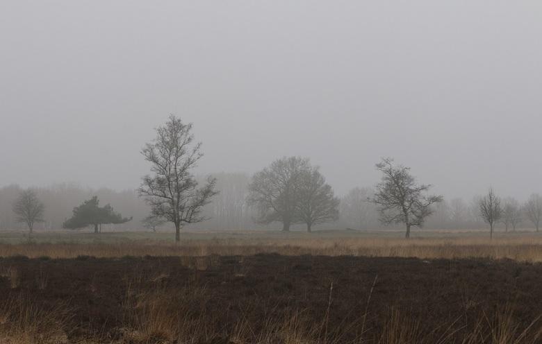 In mist gehuld - De bomen bij de Boerenveensche plassen zijn in mist gehuld en dat maakt dit gebied extra mooi