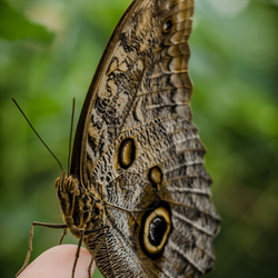 Butterfly resting on a finger