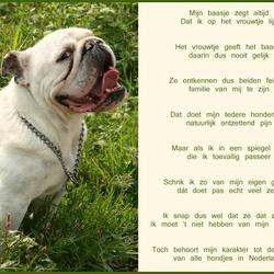 BulldogLove