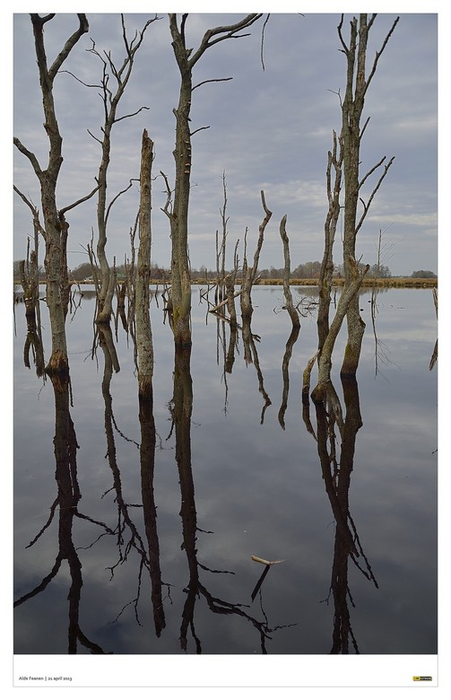 """Staketsel - Spiegeling - Wanneer je in Eernewoude vanaf de Koaidijk het natuurgbied """"De Alde Feanen"""" inloopt, zie je midden in één van de ve"""