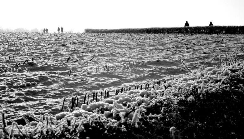 tegenlicht - zomaar een mooie winterzondagmiddag , camera mee, het tegenlicht op deze besneeuwde deldense es boeide me