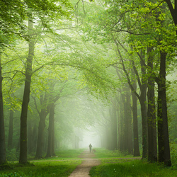 The forest walker