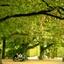 Onder de groene bomen