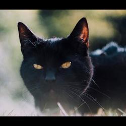 Kat op gras