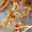spinazie staat in het zaad