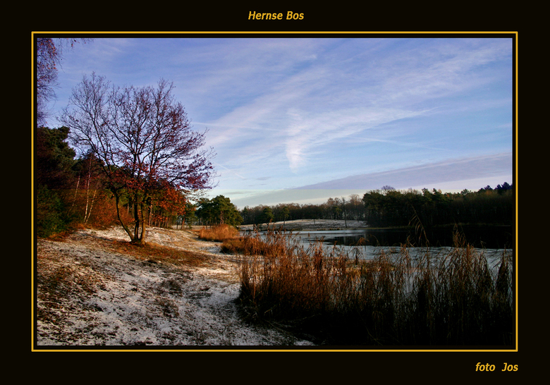 winterbegin - Vanmorgen 23-11-2008 een klein beetje winter in het Hernse Bos. Ieder bedankt voor de leuke reacties op mijn vorige upload en een fijne