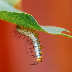 Vlinders aan de Vliet, The Netherlands