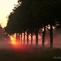 Oranje morgen