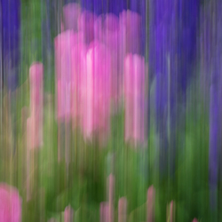 bloemen in verwarring
