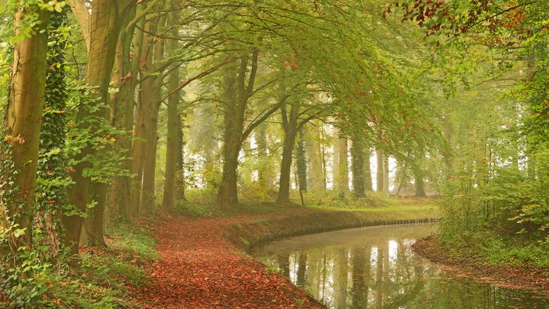Achter in het bos -