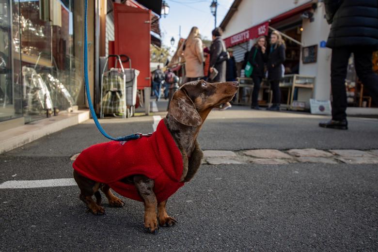Hondje op de vlooienmarkt - Een vlooienmarkt gezien vanaf de hoogte van een hond