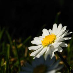 op naar het voorjaar