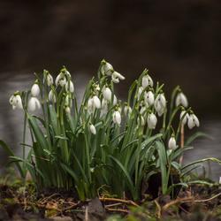 Voorjaar in Velserbeek