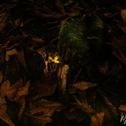 Beautiful autumn light in a dark place
