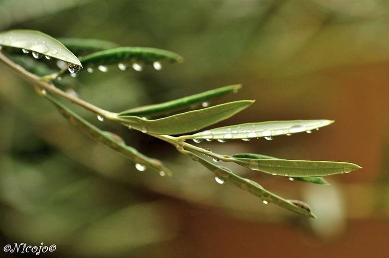 Veel regen.... - Zuid Spanje kreeg veel regen vorige week, teveel in een keer en soms zoveel als normaal in een heel jaar. Veel overstromingen, chaos