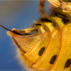Bips van een wesp