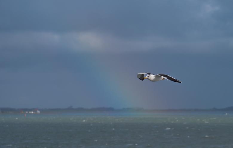 vlieg met me mee naar de regenboog