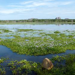 Landschap-Sri Lanka-2