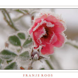 FRANJE  ROOS