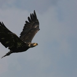 King of the sky...