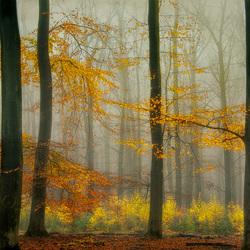 Laatste herfstkleuren......