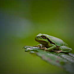 Lonely Frog...