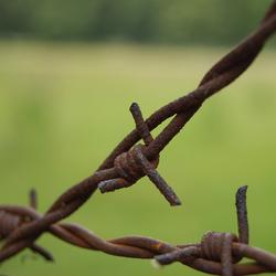 Prikkeldraad op kamp Westerbork