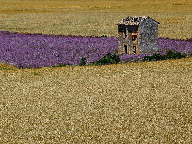 zomer in de Provence -